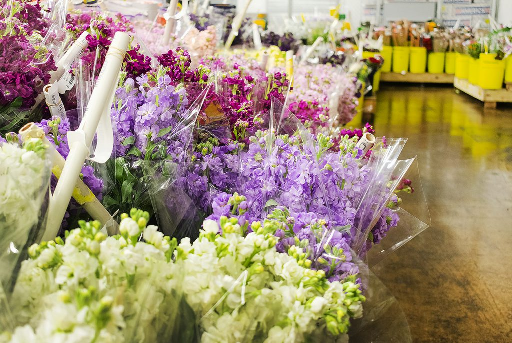 Warehouse Flower Cooler with Stock
